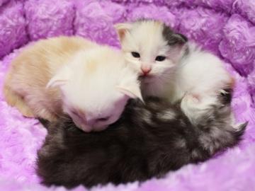 Runrun_kittens_19050302