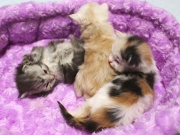 Runrun_kittens_19050305