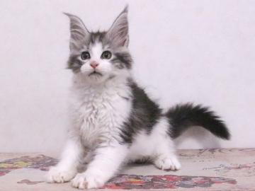 Waco_kitten1_19113001