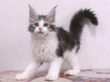 Waco_kitten1_19120203
