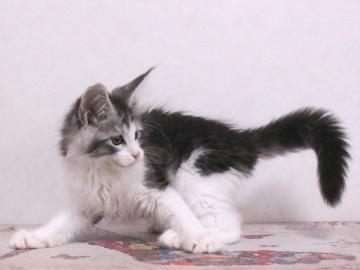 Waco_kitten1_19120204