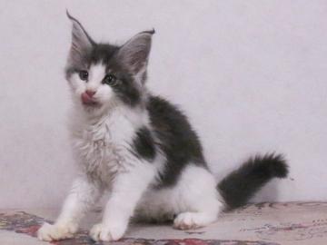 Waco_kitten2_19113001