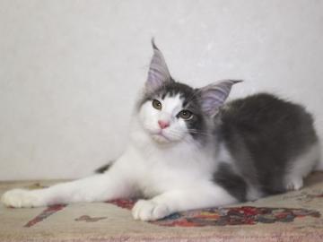 Waco_kitten2_20012901