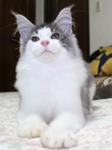 Waco_kitten2_20012909