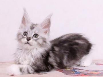 Waco_kitten3_19113001