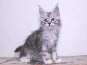 Waco_kitten3_19120501