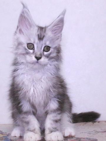 Waco_kitten3_19120503
