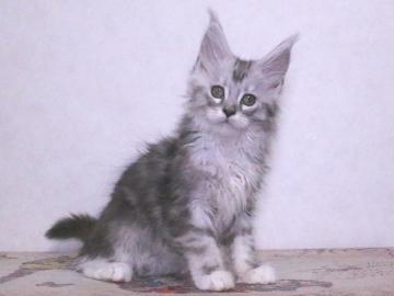 Waco_kitten3_19120504