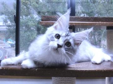 Waco_kitten3_20010701