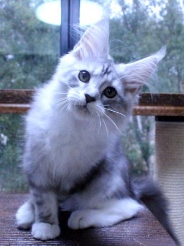 Waco_kitten3_20010703