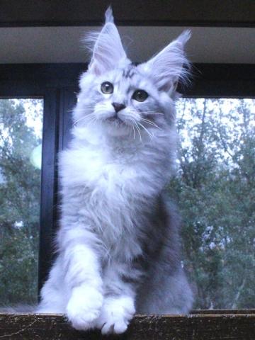 Waco_kitten3_20010704