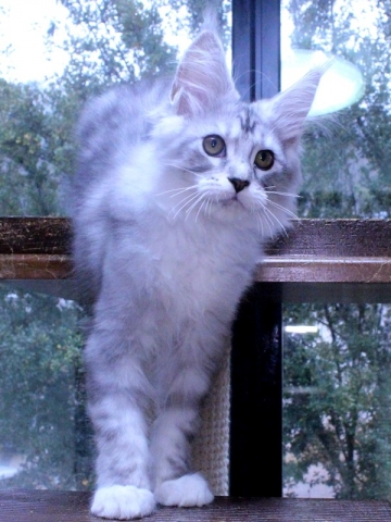 Waco_kitten3_20010705
