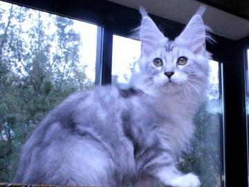 Waco_kitten3_20010706