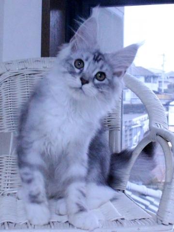 Waco_kitten3_20010707