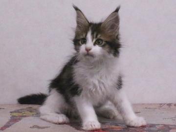 Waco_kitten4_19113001