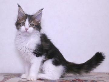 Waco_kitten4_19120605