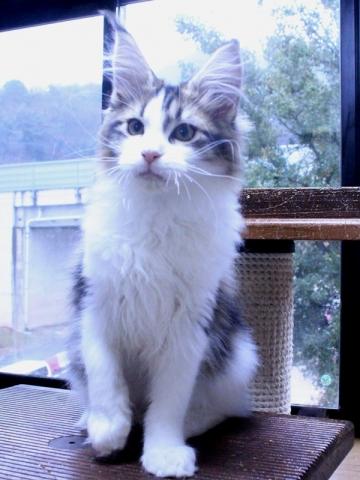 Waco_kitten4_20010701