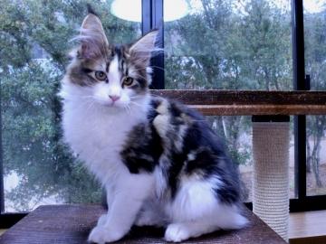 Waco_kitten4_20010703