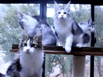 Waco_kittens_20011701