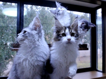 Waco_kittens_20011702