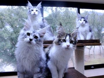 Waco_kittens_20011703