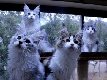 Waco_kittens_20011704
